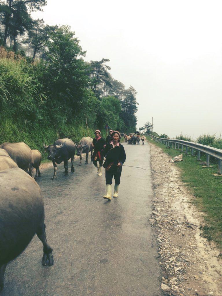 ベトナム北部農村の人々の暮らし