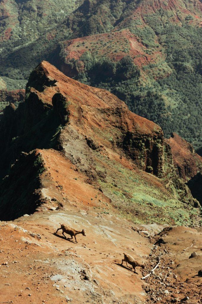 カウアイ島、Waimea Canyon。これもハワイ。