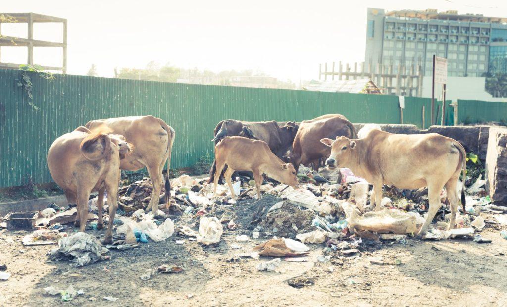 バングラデシュのゴミ問題。